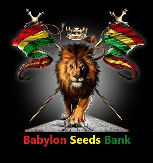 BABYLON SEEDS BANK
