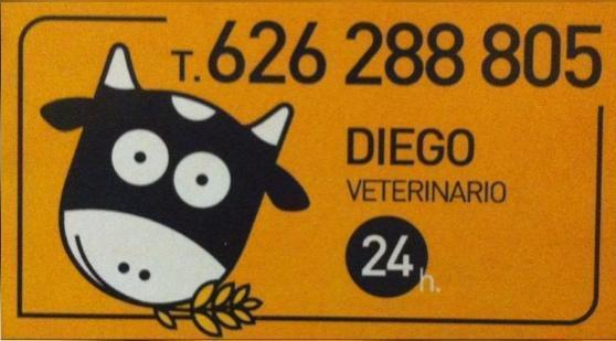 DIEGO VETERINARIO